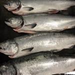 4 whole wild King Salmon